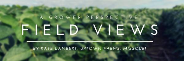 Kate Lambert - Field Views Header