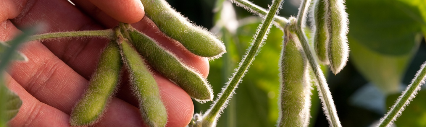 Forecast for U.S. Soybean Demand: Strong and Stronger