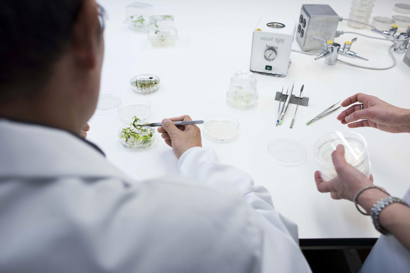 Biotech Innovation at Risk?