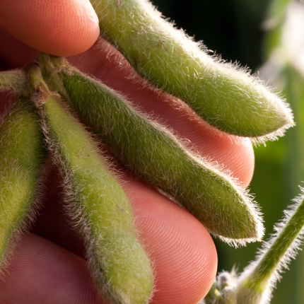 New Study: Soy Farmers Committed to Conservation